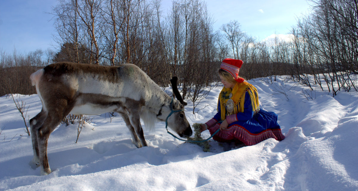 Visit our museum and feed the reindeer in the Outdoor museum!