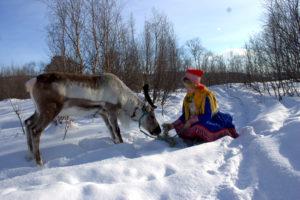 Mating av reinsdyr